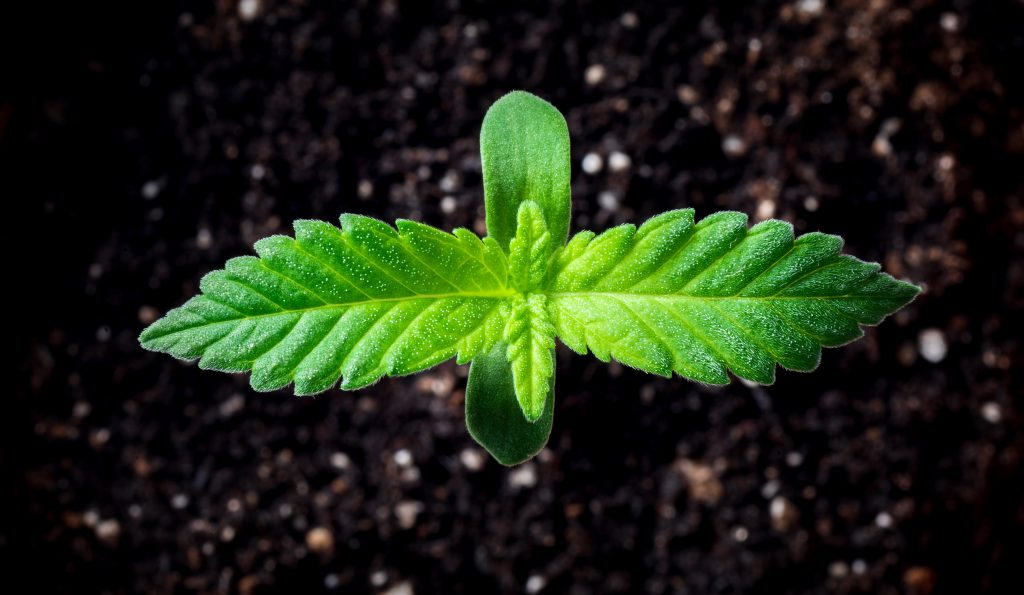 Vapour pressure deficit affects clones and seedlings