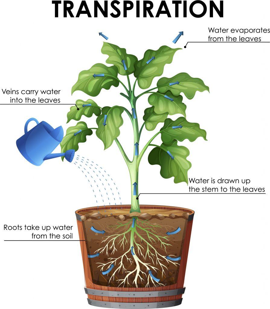 Vapour pressure deficit affects transpiration