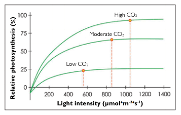 Graph showing rate of photosynthesis vs light intensity vs CO2 concentration