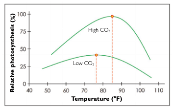 Graph showing rate of photosynthesis vs temperature vs CO2 concentration