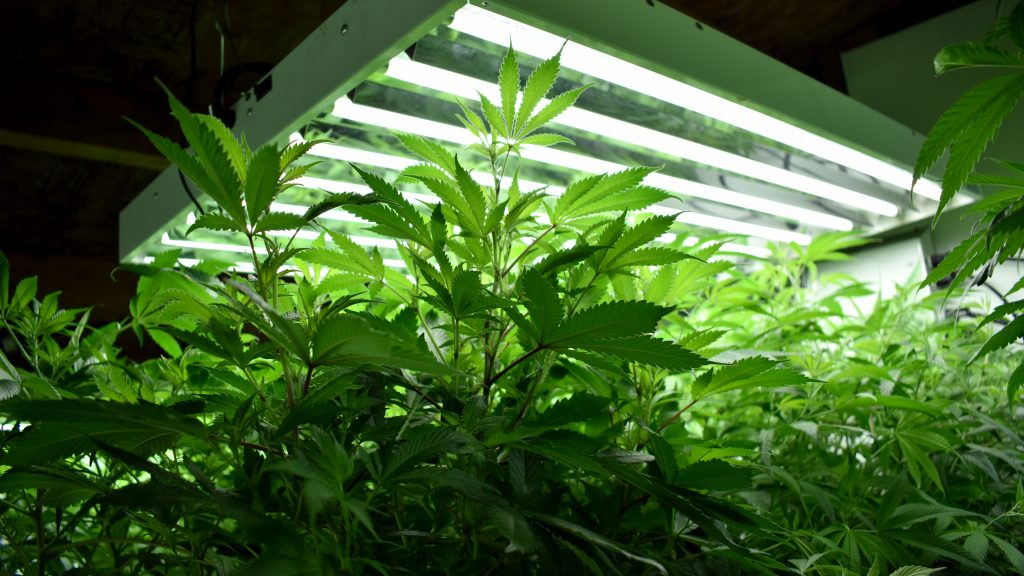 A grow room supplemented with CO2