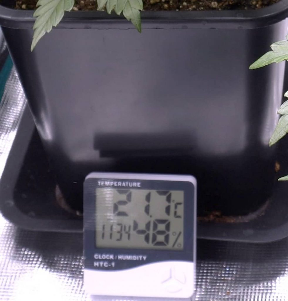 Image of taking measurements to maintain the ideal grow room temp and humidity